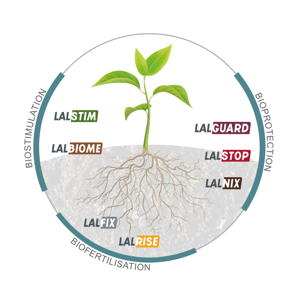 Lallemand Plant Care propose une gamme complète de produits.