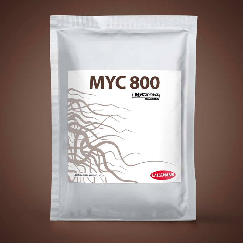 MYC 800 main image